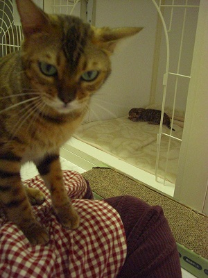 リリカ&Jr   2010511 006