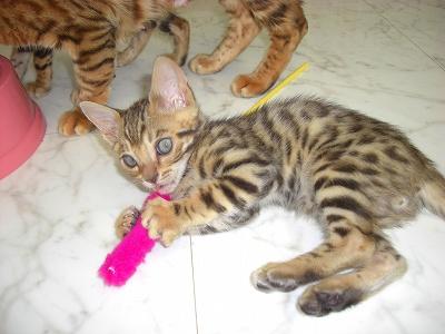 キャシーJr(バンナ) 2010605 005