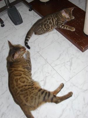 3階へお引越し(リリカ&ルイ) 20100714 061