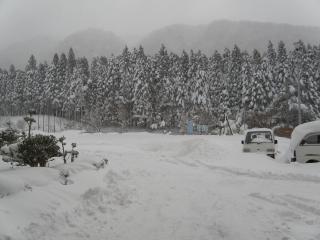 20110116-5.jpg