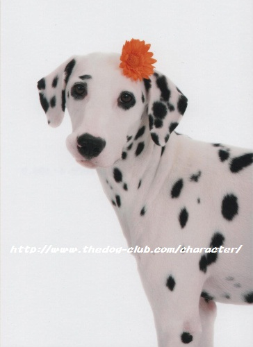 THE DOGグレース②-009