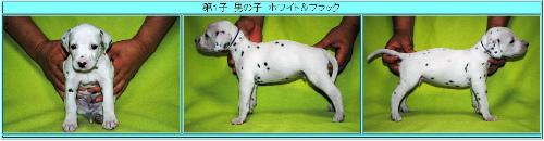 ウィンク子犬①