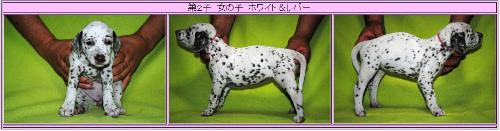 ウィンク子犬②