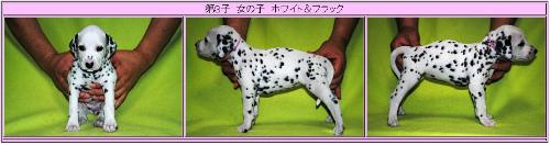 ウィンク子犬③