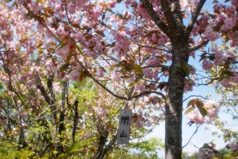 春のそよ風 059