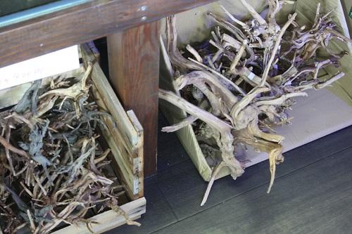 スリムウッド東海 岐阜 熱帯魚 水草 観葉植物販売 Grow aquarium