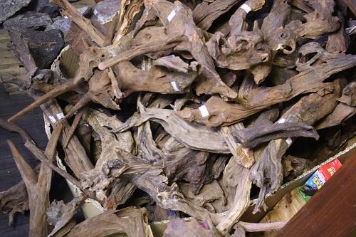 ホーンウッド 東海 岐阜 熱帯魚 水草 観葉植物販売 Grow aquarium
