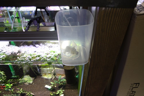 コック付バケツ 東海 岐阜 熱帯魚 水草 観葉植物販売 Grow aquarium