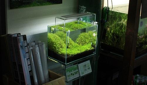 東海 岐阜 熱帯魚 水草 観葉植物販売 Grow aquarium