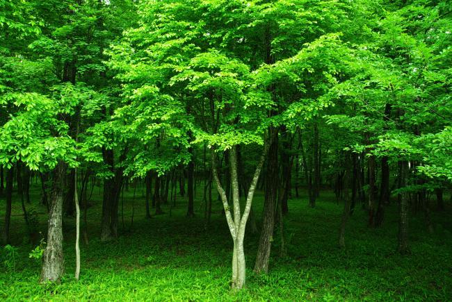 Green+forest+6mb_convert_20100605181250.jpg