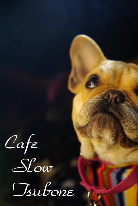 cafe+slow+tsubone_convert_20100425131659.jpg