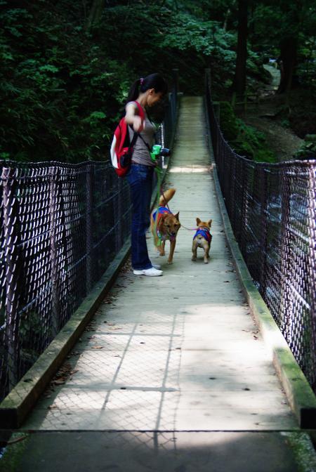 natsu+and+2+dogs_convert_20100825190509.jpg