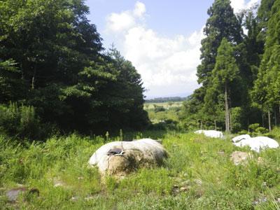 120827-02.jpg