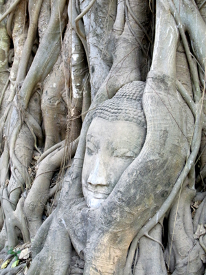 bangkok_002_07_treebuddha02.jpg