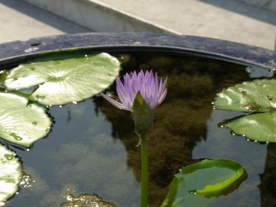 bangkok_flower_03.jpg