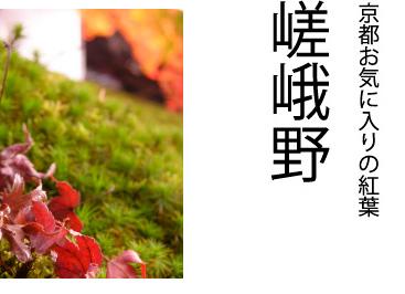 kyotokoyo2_01.jpg