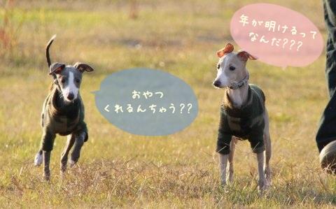 2011ねんが (8)