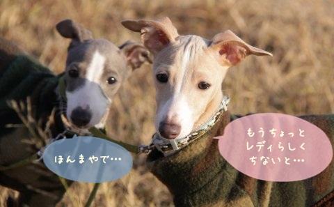 2011ねんが (2)