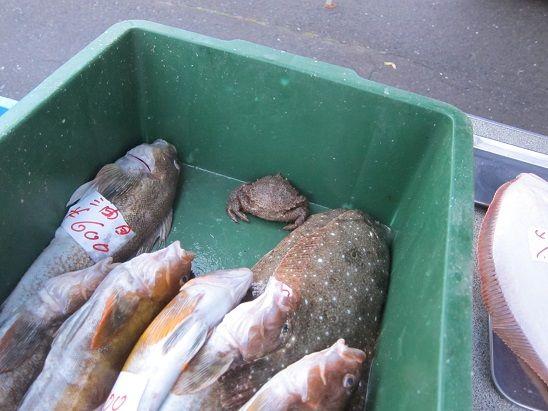 八戸朝市の活魚店