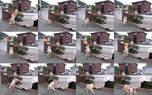 hachihikaru21_20100629204552.jpg