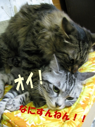 cats2013 128