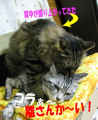 cats2013 129