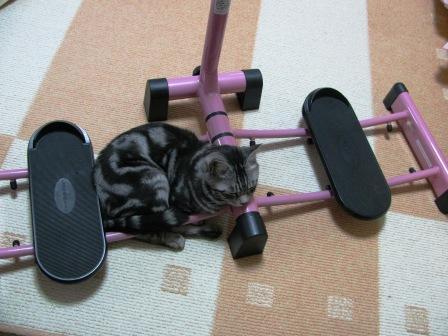 cats2013 204