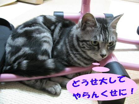cats2013 206