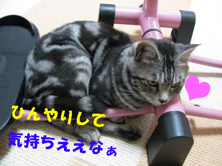 cats2013 207