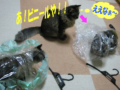 cats2013 071