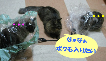cats2013 072