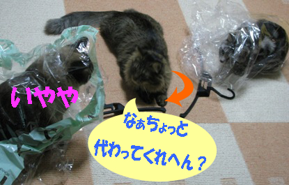 cats2013 073