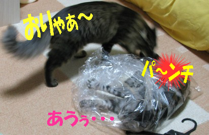 cats2013 076