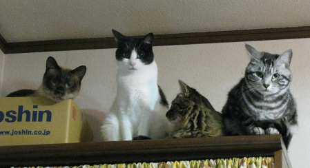 cats2013 012