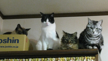 cats2013 011