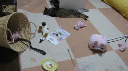 cats2013 013