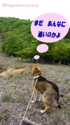 dog_0006