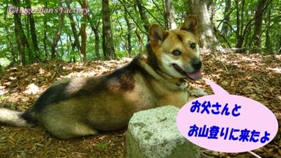 dog_0005