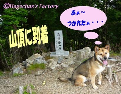 dog_0003
