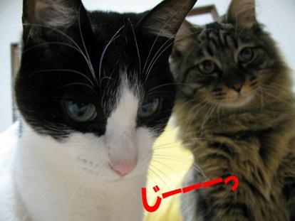cats2013 015