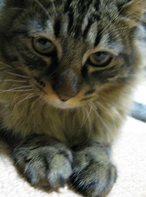 cats2013 017