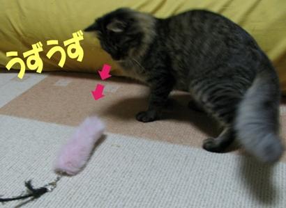 cats2013 018