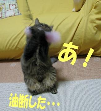 cats2013 021