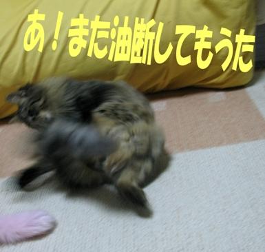 cats2013 024