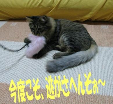 cats2013 025