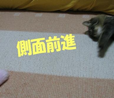 cats2013 026
