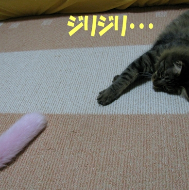 cats2013 027