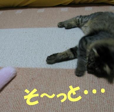 cats2013 028