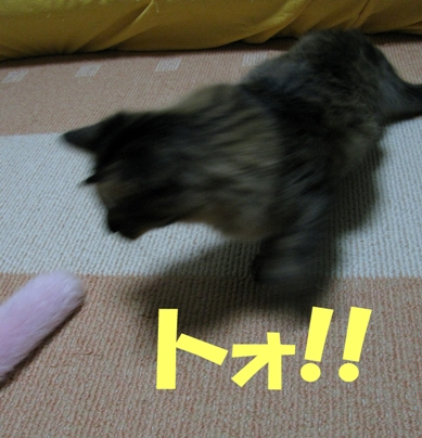 cats2013 029