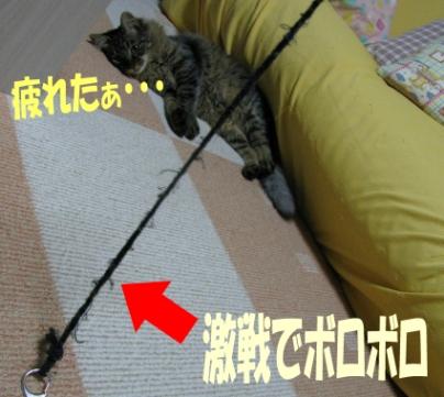 cats2013 031